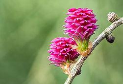 fleurs de bach, potentiaile, vaud