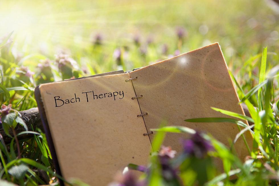 Cours Fleurs de Bach, Potentiaile_