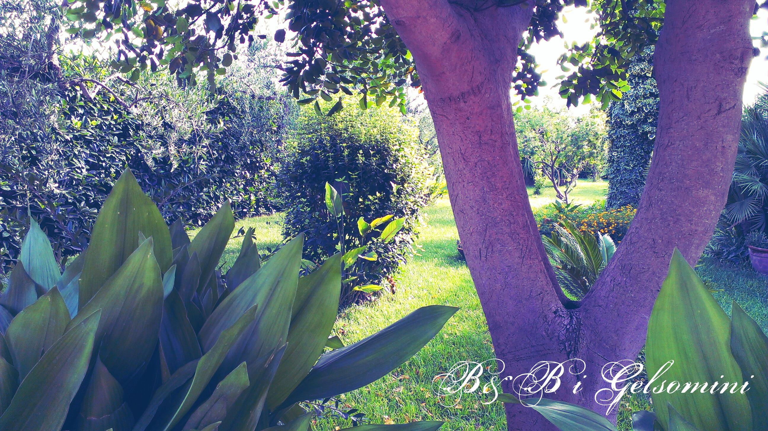 Giardino relax e accesso wifi