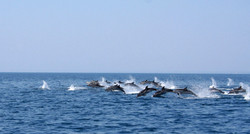 Delfini Marina di Ginosa