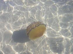 Medusa Marina di Ginosa