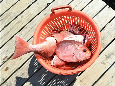Alabama Announces State Water Red Snapper Season