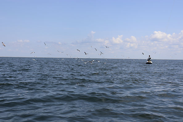 fishingwithgulls.JPG