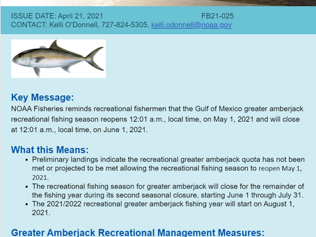 Greater Amberjack Season Opens For May!