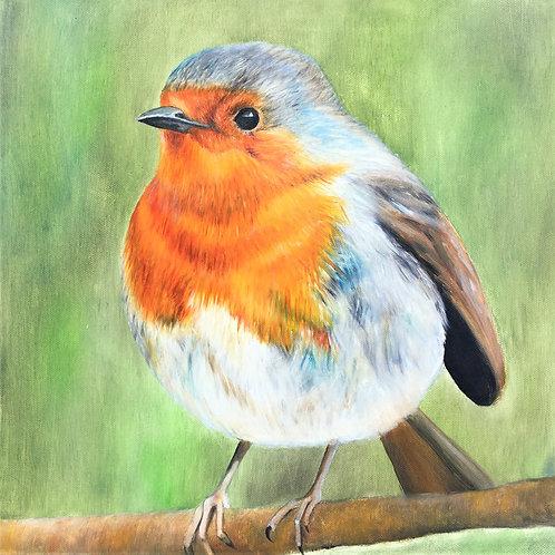 A Sevenoaks Robin