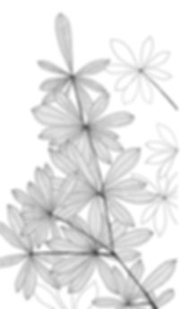 Dessin FEUILLAGE MOABI.jpg
