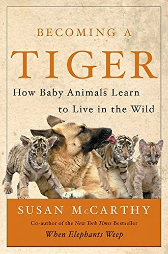 Becoming a Tiger by mccarthy susan