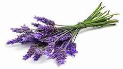 Lavender Blends