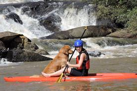 Empresas de aventura, hotelaria e gastronomia investem em estrutura de Pet Friendly