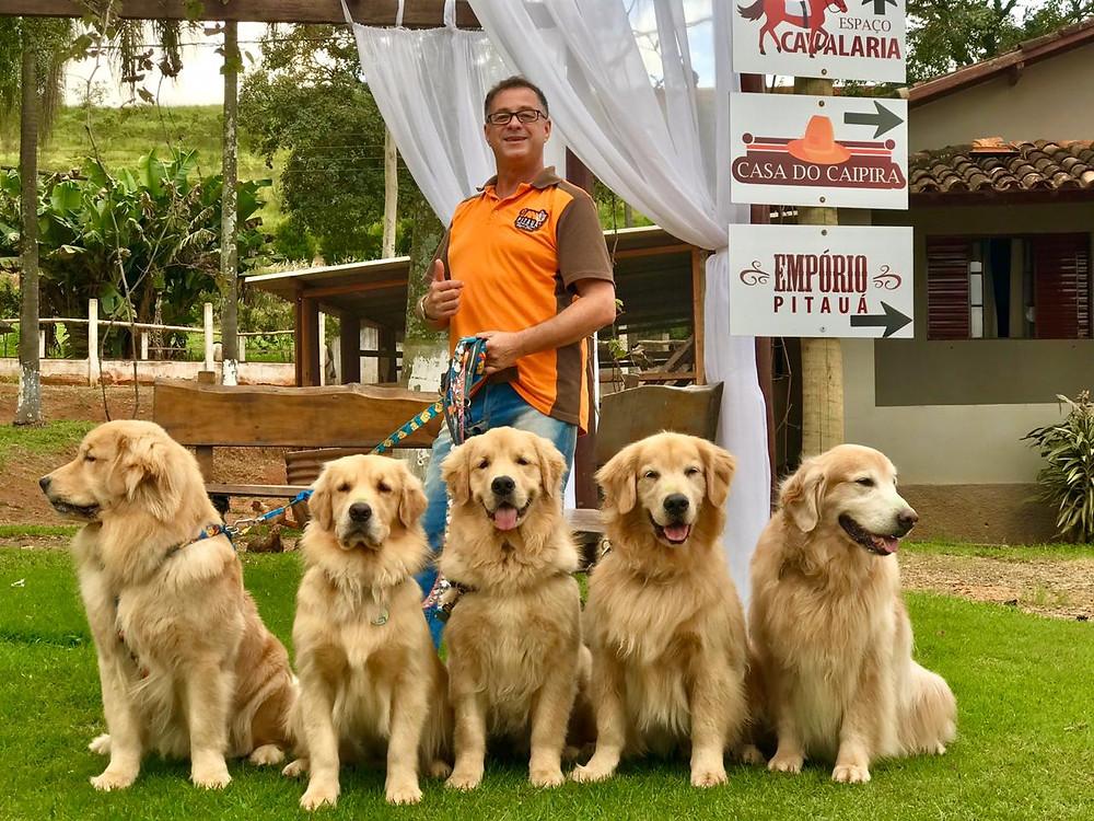 Cães da raça Golden em um restaurante com seu cuidador