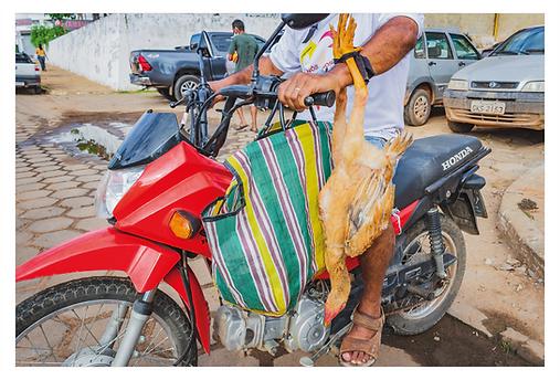 Um senhor está saindo do Mercado Municipal em sua moto vermelha. No guidão esquerdo ele carrega uma sacola de feira listrada. No braço esquerdo está pendurada uma galinha marrom de cabeça para baixo e amarrada pelos pés.
