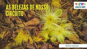 AS BELEZAS DO NOSSO CIRCUITO
