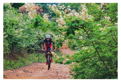 Um ciclista enfrenta uma subida por uma trilha de terra. Dos dois lados da trilha predomina uma vegetação que forma um maciço muito verde e carregado de flores em forma de pompons brancos e bege. Esse detalhe da floração dá um encanto a mais pelo caminho.