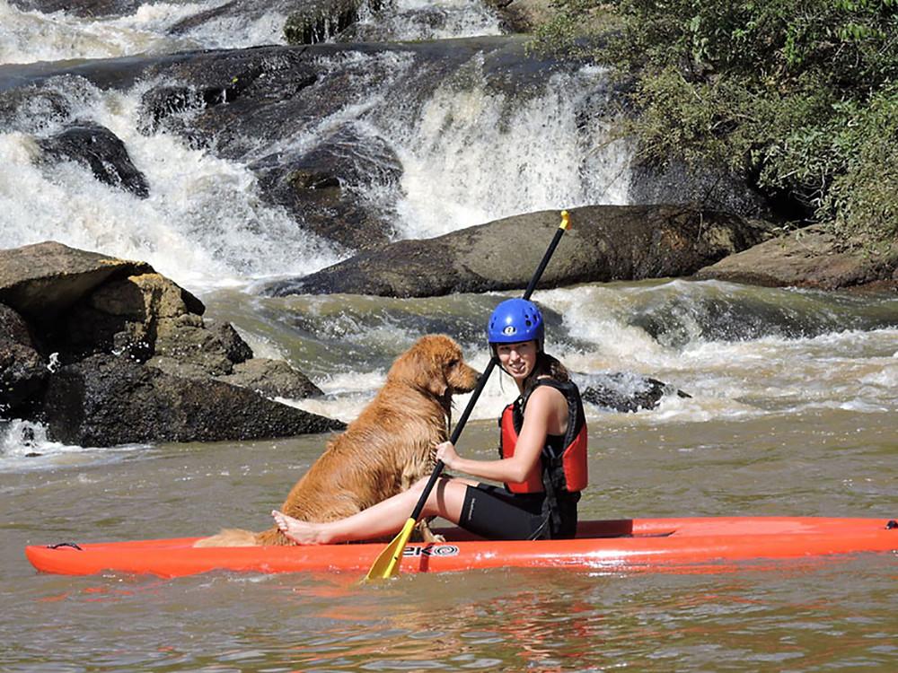 Cão da raça Golden em prancha de Stand-Up-Padle em um rio