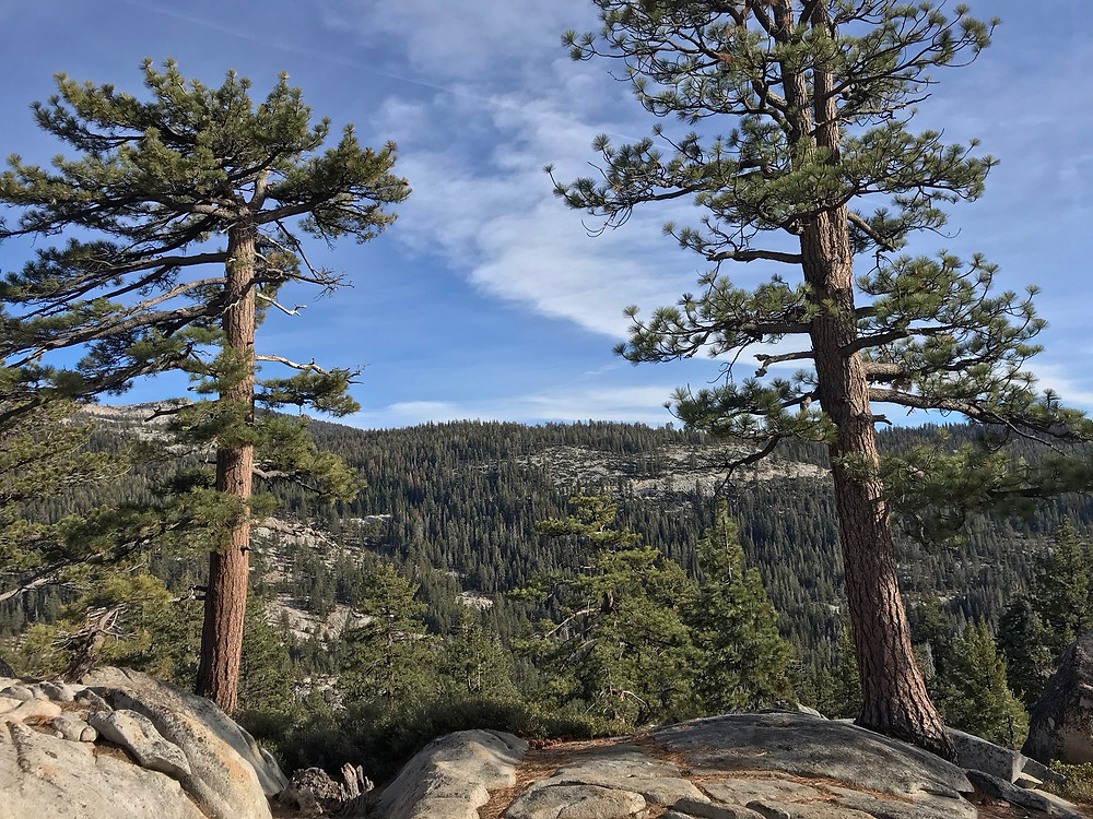 Trees that Grow Out of Rocky Ground