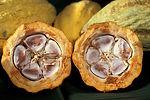 cacao-pod-1916418_960_720.jpg