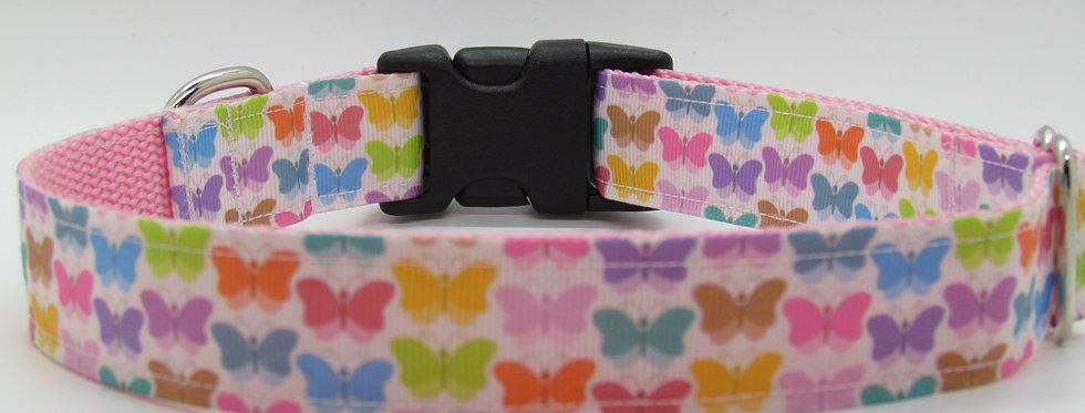 Rainbow Butterflies Dog Collar