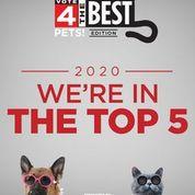 vote 4 2020.jpeg
