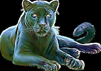 panther-transparent-2.png