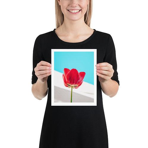 Teal & Tulip Poster