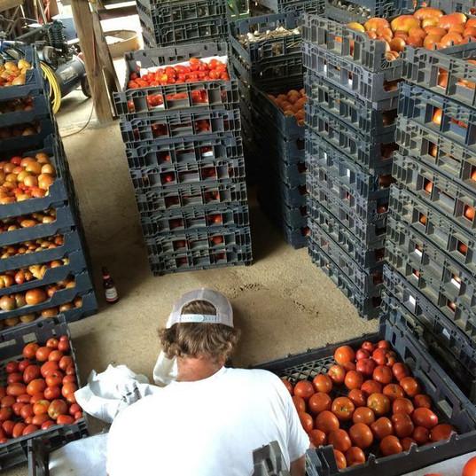 Tomatoes Storage.JPG
