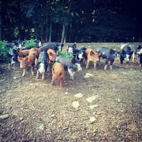 Pigs Babies in the Woods.JPG