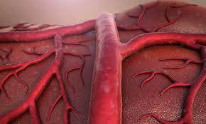 Humans are growing an extra blood vessel in our arm