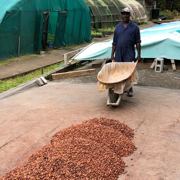 Drying the beans.jpg