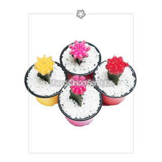 Cactus Coreano 5S.jpg