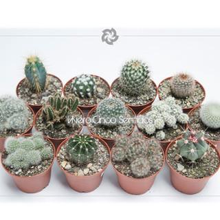 Cactus 5S.jpg