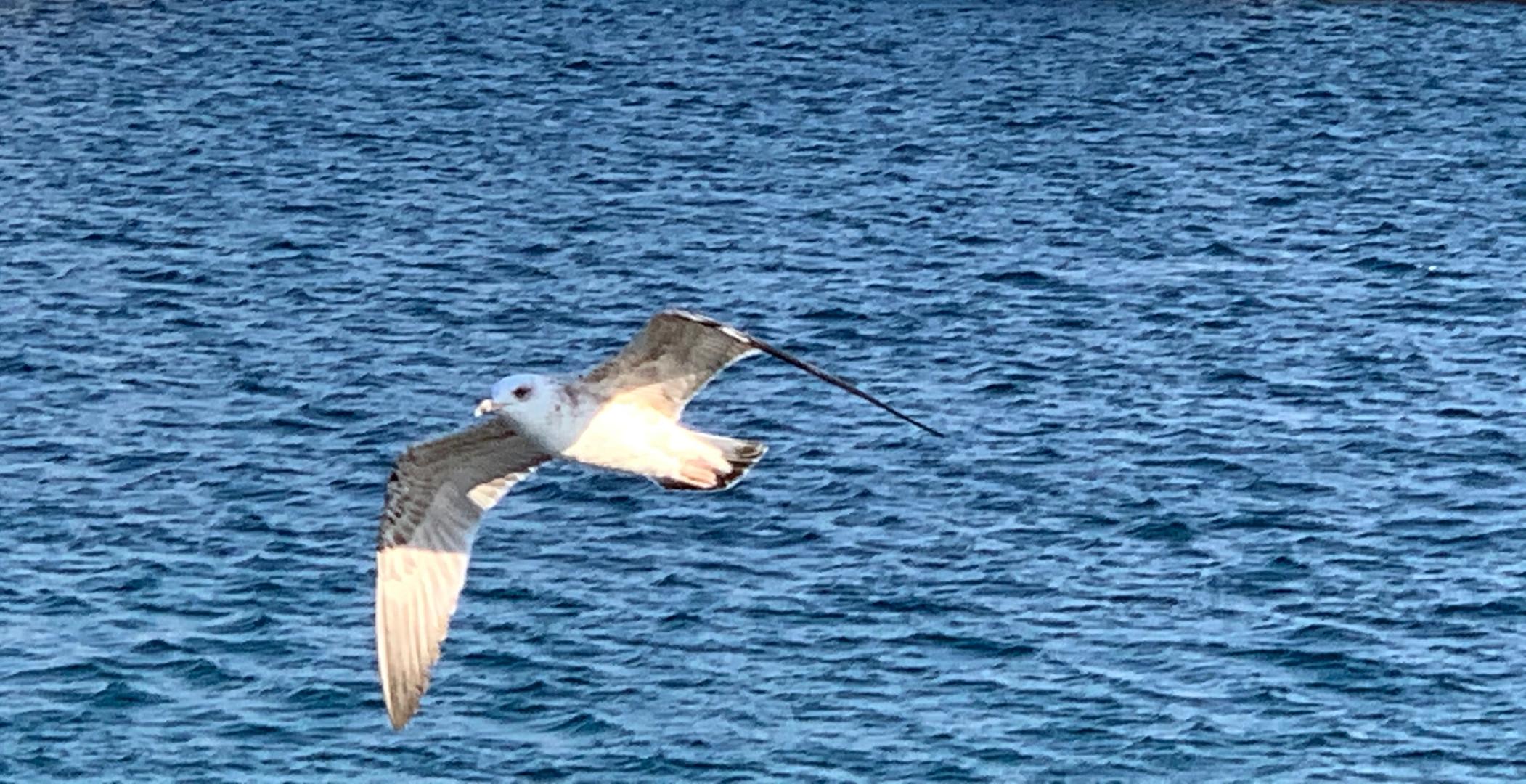 Flug zu neuen Ufern