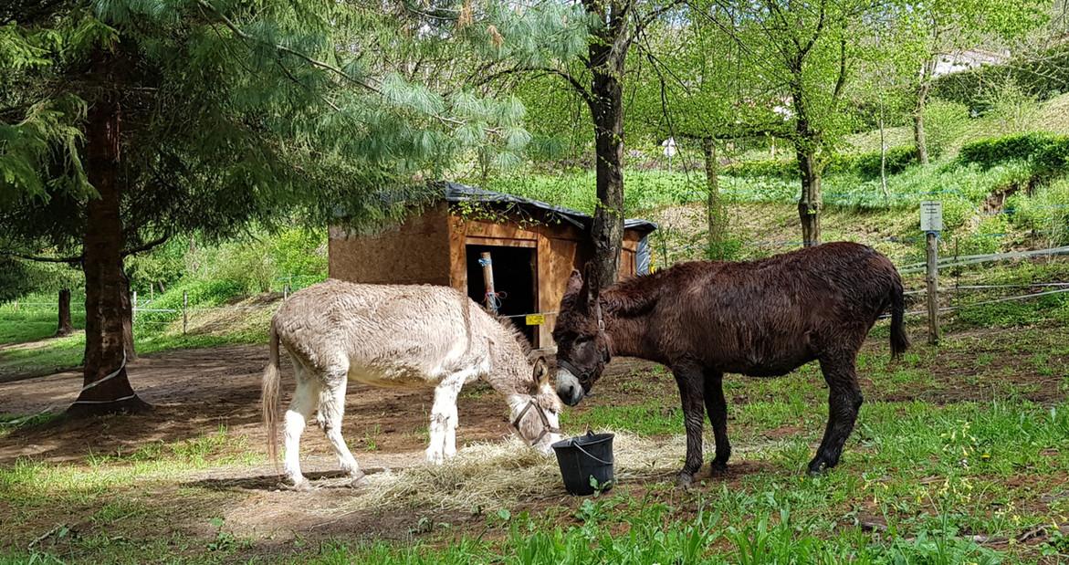 Nos ânes sur le camping
