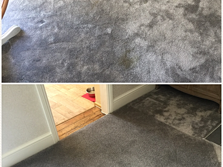 Poo Stains & Carpets