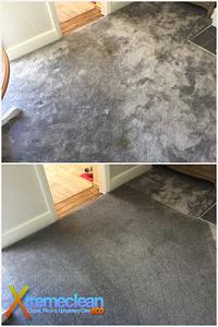 Dog Poo On Carpet