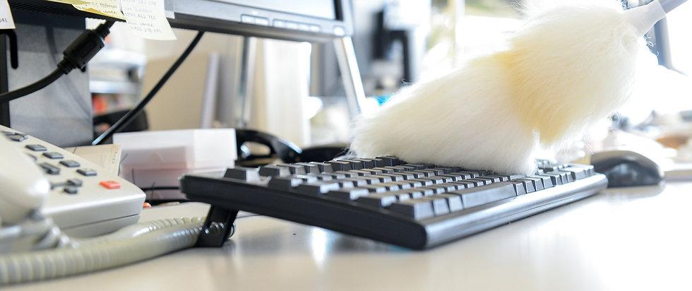 dusting keyboard.jpg