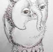 Owlephant Doodle