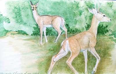 Deer Doodle