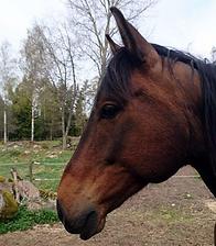 Linda_Malmkvist_Mindful_Tapping_häst.png