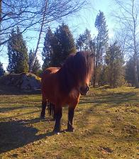 Linda_Malmkvist_Mindful_Tapping_häst2.pn