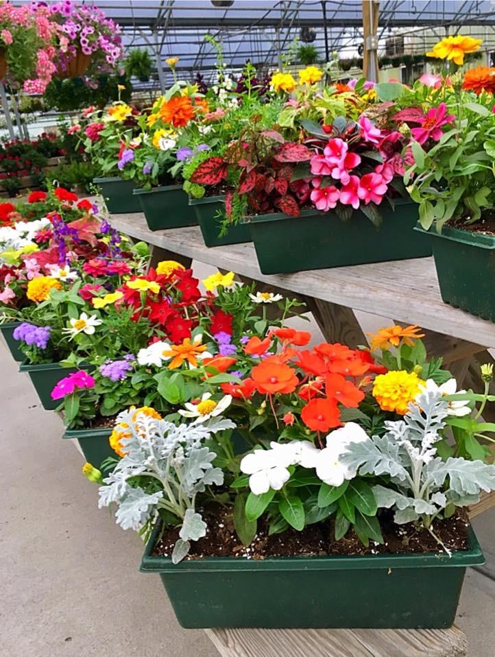 Kansas city-flowers-perennials-farrand-farms