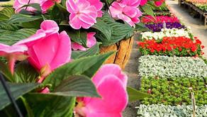 It's Spring! Time to Prep Your Garden Soil.