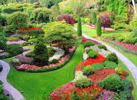 Create Your Dream Garden or Vegetable Garden