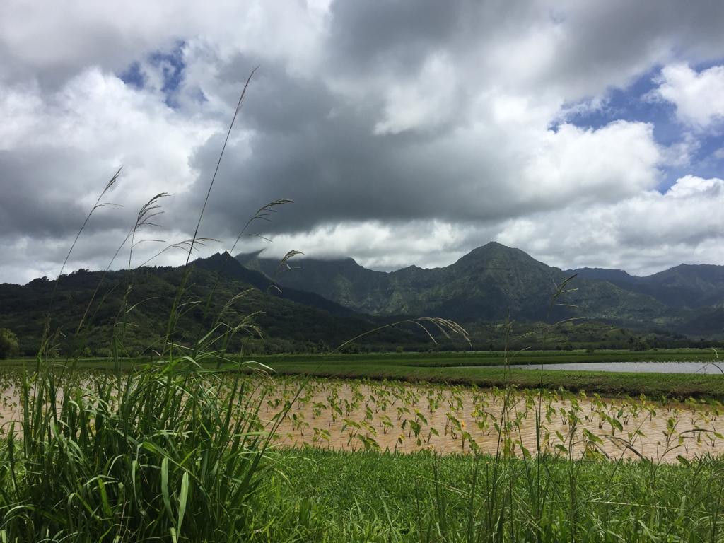 Tarot fields in Kauai, Hawai'i