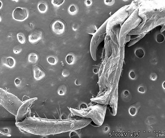 Differential grasshopper foot