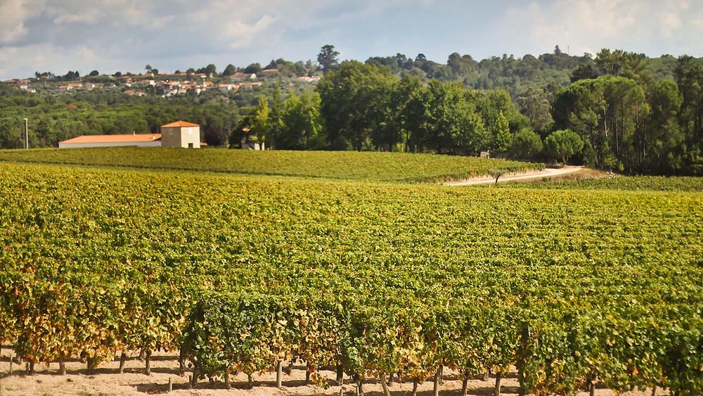 Weinbaugebiet Dão
