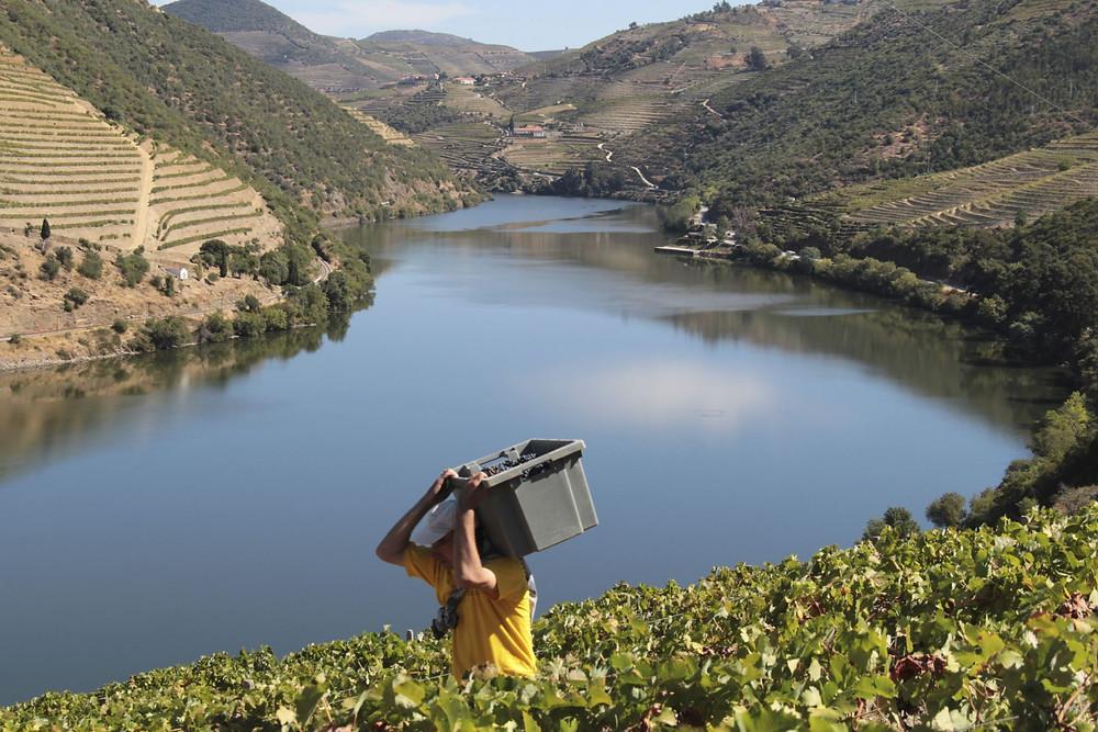Weinbauregion Douro