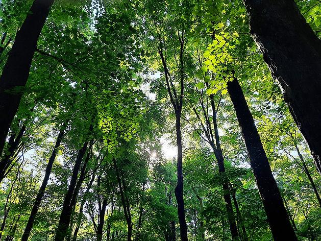secrets_forest.jpg
