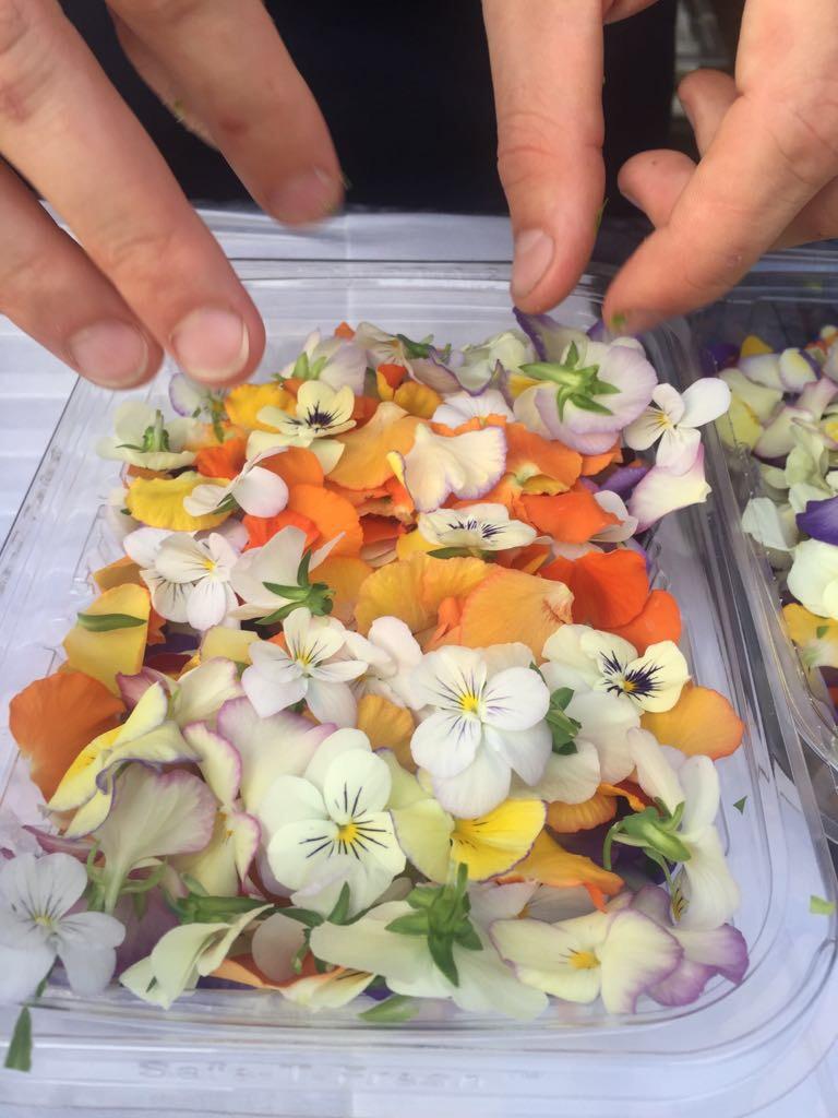Fiori eduli - floral catering  - menu scenografici Giovanna Bettega