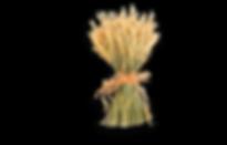 StrawFestLogo_2019_black.png
