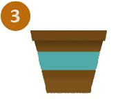 3-Plante.png